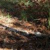 Le sentier ancestral est régulièrement aménagé de cunelles en pierres sèches