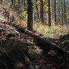 Les premiers troncs qui jonchent le sentier